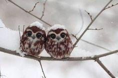 フクロウの赤ちゃん見たことある?初めて見る人は想像以上に可愛いと思うはず!