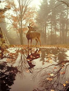 Deer on the woods - Pixdaus