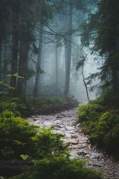 beautiful landscapes Fascinating Photographs of Forest Paths to another world Landscape Photography, Nature Photography, Photography Tips, Digital Photography, Lightning Photography, Photography Lighting, Portrait Photography, Wedding Photography, Nature Sauvage
