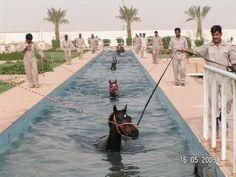 An amazing shot of horses doing swimming exercises.