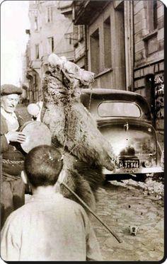 Tarihe karışan bir meslek; Ayıcılık İstanbul - 1950'ler
