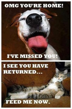 difference between cats and dogs humor - Cat memes - kitty cat humor funny joke gato chat captions feline laugh photo Humor Animal, Animal Memes, Funny Animals, Cute Animals, Animals Dog, Funniest Animals, Animal Logic, Animal Sayings, Animal Fun