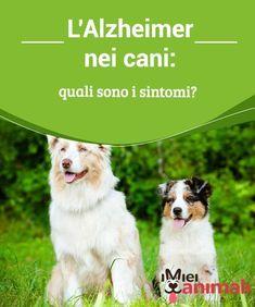 L'Alzheimer nei cani: quali sono i sintomi? Il #problema dell'#Alzheimer è tanto grave quanto delicato. Ecco allora como riconoscere e interpretare i #sintomi di questa malattia, per agire in tempo. #Consigli