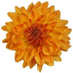 Orange Wedding Flower - Orange Dahlia  30 stems $129.99