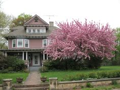 The Best Places For Planting Kwanzan Cherry Tree