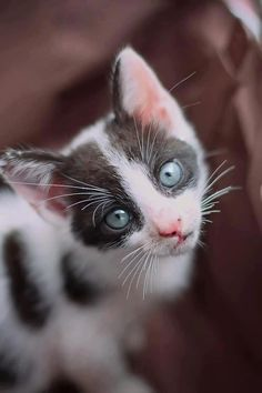 #kittens #cute