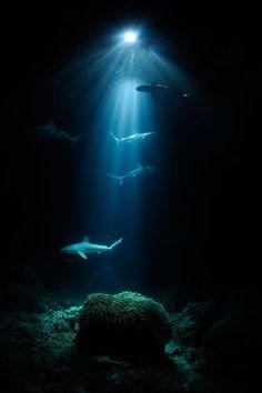 Amazing shark photo