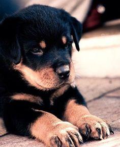 Es imposible que no se derrita el corazón, cuando se ven cachorritos tan adorables. Seas fan o no de los animales, perros, gatos, cachorros...da igua...