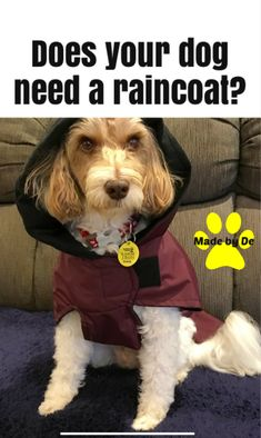 When it rains, your dog gets wet. Unless you have a dog raincoat, of course. A raincoat will keep your dog dry and warm while cutting down on the mess of having a wet dog. Find out more here. Dog Smells, Dog Raincoat, Dog Coats, Waterproof Fabric, Stay Warm, Pup, Dogs, Coats For Dogs, Dog Baby