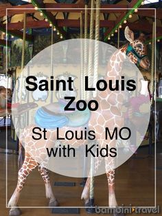 How to Make the Most of the St Louis Zoo | Top tips for visiting the Saint Louis FREE zoo with kids | Bambini Travel