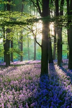 Spring woods. Violet floor. Emerald green ceiling, light in between.