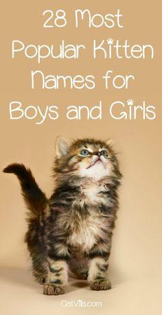 86 Cat Names Ideas Cat Names Kitten Names Cute Cat Names