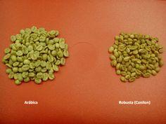 Conheça as diferenças entre as duas espécies de café cultivadas e comercializadas no mundo.