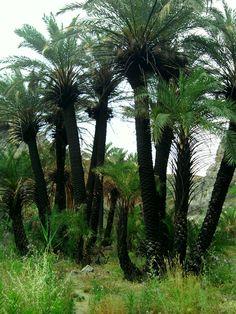cactus reborn Preveli Crete Greece