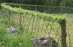 Make a 'Fedge' - a living fence/hedge.