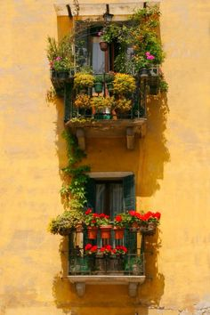 These beautiful window scenes are everywhere in Italy