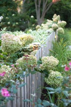 ~hydrangea spilling over picket fence~ Garden Shrubs, Garden Fencing, Garden Art, Garden Landscaping, Landscaping Ideas, Side Garden, Amazing Gardens, Beautiful Gardens, Beautiful Flowers
