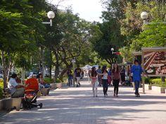 El Camellón de la Avenida Chapultepec, un espacio recreativo donde cada sábado se instala el Tianguis Cultural.