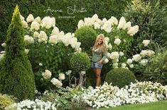 Lecę w kulki...: Jak przycinać hortensje bukietowe ? Garden Art, Garden Plants, Garden Design, Deck Enclosures, Hydrangea Garden, Hydrangeas, White Gardens, My Secret Garden, Bouquet