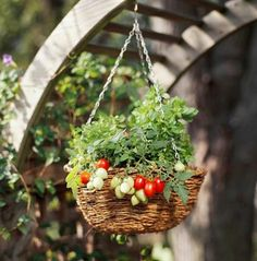 Take advantage of a sunny spot & plant cherry tomatoes & basil in a hanging basket | Midwest Living