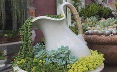 pflanzkübel alte porzellan teekanne wasserkanne sukkulenten