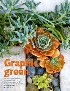Color scheme idea - April 2012 Sunset Magazine article featuring Lenkin Design's planting design