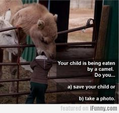 camel, funny pics, funny pictures, funni, joke, parent, laughter, petting zoo, kid