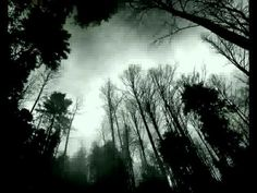 Forest Black And White Background Hd Wallpaper Source by DesktopWallpaperHD
