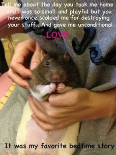 Adopt a rattie
