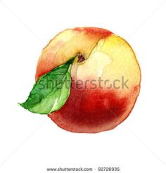 peach. watercolor painting on white background - stock photo
