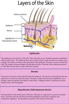 7 Facts About the Integumentary System Every Nursing Student Should Know - Nursecepts This article will look at the components and the accessory structures of the integumentary system, skin healing, skin integrity, and the formation of pressures ulcers. Skin Anatomy, Human Body Anatomy, Human Anatomy And Physiology, Nursing School Notes, Nursing Schools, Lpn Schools, Medical School, Nursing School Prerequisites, Skin Structure