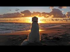 The Last Battle: A pets poem - YouTube
