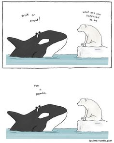 """Panda whale: """"Trick or treat!"""" """"What are you supposed to be?"""" """"I'm a panda."""" """"Duh, obviously"""" Memes Humor, Funny Jokes, Hilarious, Cute Comics, Funny Comics, Liz Climo Comics, Funny Animals, Cute Animals, Talking Animals"""