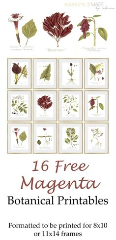 Magenta botanical FREE printables.  Check out this post for options on how to print these.  More free printables are available at www.simplymadebyrebecca.com. Plastic Picture Frames, Wood Picture Frames, Picture On Wood, 11x14 Frame, 10 Frame, Letter Size Paper, State Art, Beautiful Space, Botanical Prints