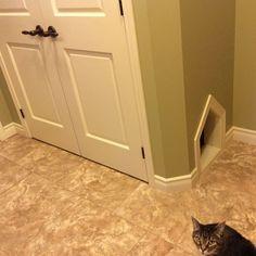 Cat litter box closet