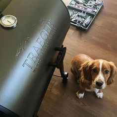 """We put our little Traeger Tailgater together today! I LOVE a Traeger grill!! I'm coming for that pink """"lil' pig"""" Traeger next!! #traegergrills #grillingandchilling #grillgirls #buddytheenglishcockerspaniel Reposted Via @jennahelm"""