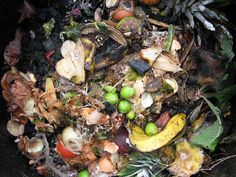 Compost is organic material that can be used as a soil to grow plants. Learn how to become a composting guru! Organic Farming, Organic Gardening, Gardening Tips, Composting 101, Waste Solutions, Urban Chickens, Garden Nursery, Nursery Décor, Garden Insects