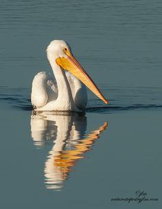 Reflections #nature #animals