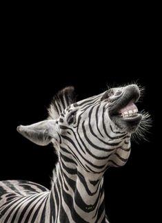 Funny Giraffe Pictures, Funny Pictures, Funny Pics, Black White Photos, Black And White, Zebras, Back To Black, Animal Kingdom, Wildlife
