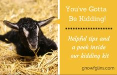You've Gotta Be Kidding! Helpful Tips and Kidding Kit | Kidding season is almost upon us and we couldn't be more excited! Baby goats are sim...