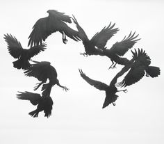 Crow Surround. Graphite on paper.2010. 95x90cm.