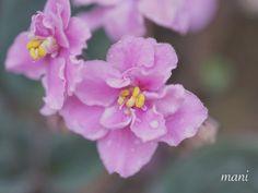 お花の撮影上手くなりたいです 撮影場所東京都新宿 #新宿御苑 #カメラ初心者  #マクロ #写真撮ってる人と繋がりたい  #東京カメラ部 #写真好きな人と繋がりたい #flower #桜 #はなまっぷ  #flowers #花 #ザ花部  #flowerpower #flowermagic  #ファインダー越しの私の世界  #sonyphotography  #sonya7ii #sonya7 #f4f  #flowerstagram #flowerslovers  #flowerstalking #flowerporn  #flowerstyles_gf #flowersofinstagram #ig_japan #team_jp_ #japan_night_view #icu_japan #IGersJP by mani022400