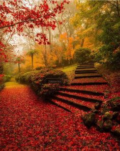 Breenhold Gardens Mount Wilson New South Wales Australia l Photography by by destination. Beautiful World, Beautiful Places, Beautiful Pictures, Wonderful Places, Beautiful Stairs, Amazing Photos, Autumn Scenes, Autumn Cozy, Autumn Park