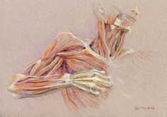 Susan Dorothea White  Drawing the Bow, 2006  conté, pastel, pencil underdrawing, 30 x 21 cm