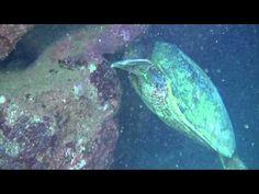 Ocean Defender ~ Kauai Reef Project