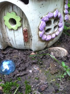 The baby toads seem to enjoy the fairy garden