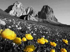 Alpi e Dolomiti - Alps and Dolomites. Chennai, Web Design, Land Scape, Travel Pictures, Monument Valley, Landscape Photography, Beautiful Places, Amazing Places, Places To Visit