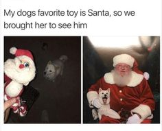 Ideas funny dogs memes hilarious christmas for 2019 Memes Humor, Funny Dog Memes, Funny Animal Memes, Cute Funny Animals, Cute Baby Animals, Funny Cute, Funny Dogs, Animals Dog, Cute Puppies