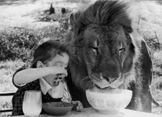 Close-up of a girl and a lion having breakfast together - by SuperStock