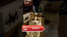 😸 Vlog Peach my favorite funny cat 😼 Welcome to Vlog of were I show my cat Peach Vlog Sunday SUBSCRIBE FOR MORE Other channelLuigieric MCPE…
